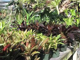 native plant nurseries mama u0027s garden center and plant nursery about usmama u0027s garden center