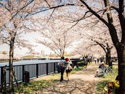 the top 7 places in japan to see cherry blossom booking com