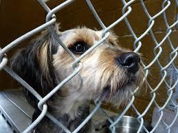 rover com recommends 15 ways to help homeless dogs rover com