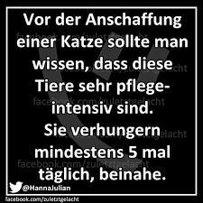 s e katzen spr che 28 best sprüche images on quotes texts and black
