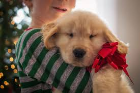 christmas tree puppy safety