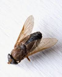 how to get rid of horse flies around a swimming pool swimming