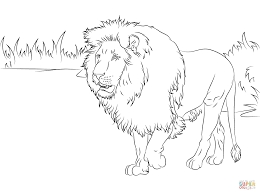 gorgeous lion coloring free printable coloring pages