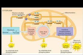 Cell Reproduction Concept Map Answers Ap Biology Concept Map Concept Map