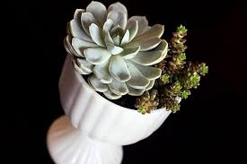 succulents and milk glass two of my favorite things jennadesigns