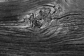 shutter mike photography texture detail of wood in black white
