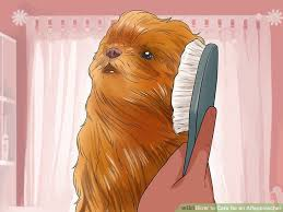 affenpinscher vs yorkshire terrier 3 ways to care for an affenpinscher wikihow
