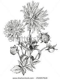 25 best botanical images on pinterest