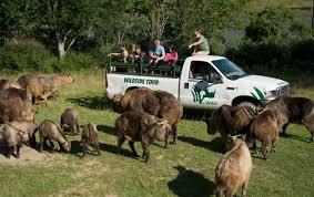 Ohio wildlife tours images The wilds history jpg
