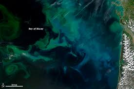 Wildfire From Space by Colorful Plankton Blooms From Space