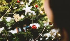 real christmas tree tips for time buyers of real christmas trees bob s garden