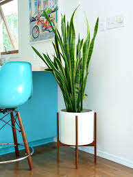 modernica study ceramic planter with wood stand tools and