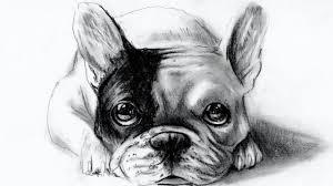drawn bulldog pencil drawing pencil and in color drawn bulldog