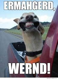 Ermahgerd Animal Memes - animals for ermahgerd animal memes hilarious www animalsmix com