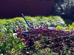 garden inspiration heaven scent gardens