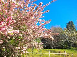 spring in the blue mountains the season of joy sydney