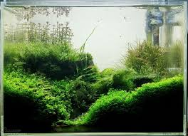 Aquascapes Game Play Online 14 Best Diorama Aquascapes Images On Pinterest Aquarium Ideas