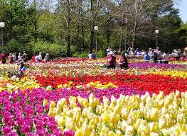 flower places the best time to visit dalat