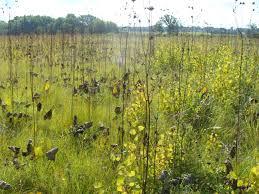 wisconsin native plants autumn in se wisconsin prairie botanist