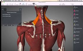 Anatomy Of The Shoulder Girdle Muscles Of Pectoral Girdle Youtube
