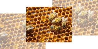 Backyard Beehive Beekeeping 101 Diy Beekeeping Supplies Plans And Ideas