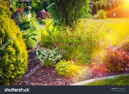 sunny summer garden beautiful residential backyard stock photo