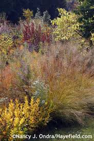 native plants in pennsylvania 254 best ornamental grasses for sun and shade images on pinterest