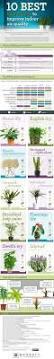 houseplants that improve indoor air quality popsugar home