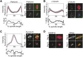mitotic spindle scaling during xenopus development by kif2a and