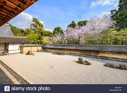 kyoto japan the ryoan ji temple zen rock garden in the spring