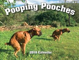 Pooping Memes - i can has cheezburger pooping funny internet cats cat memes