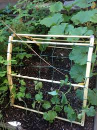 Growing Cucumbers Up A Trellis Garden Update U2013 My First Birds