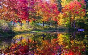 fall colored trees along river stock photo image 44893258