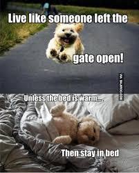 funny dog live life like bajiroo com