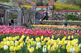 image of spring flowers biltmore blooms spring flowers guide