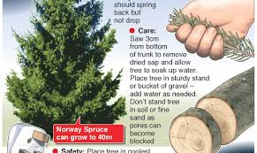 christmas tree care tips u2013 stop the needle drop u2013 an annotated