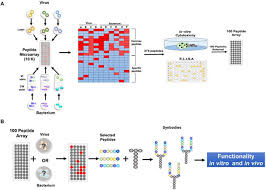 a simple platform for the rapid development of antimicrobials