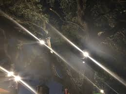 took this on friday it is trees with lights in them tree tree