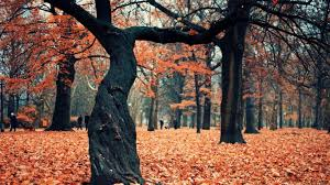 forest colored forest autumn colorful trees amazing