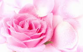 Pink Colour by 40 Cool Pink Wallpapers For Your Desktop