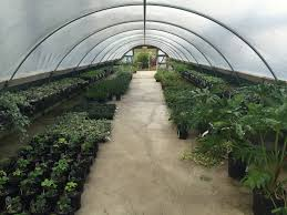 local nursery to be featured on next season of u0027fixer upper u0027 the