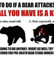 Meme Bear - 25 best memes about bear attack meme bear attack memes