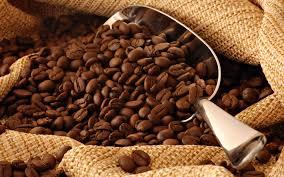 Luwak Coffee kopi luwak coffee kopi luwak direct