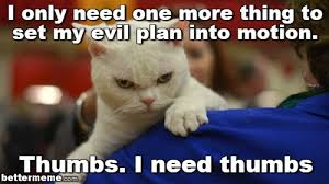 Evil Cat Meme - thumbs cat