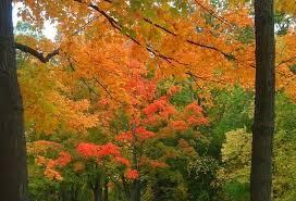 Michigan nature activities images Fall scenic crawl through jackson michigan jpg