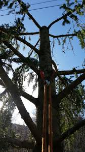 82 best arborist climbing images on pinterest climbing