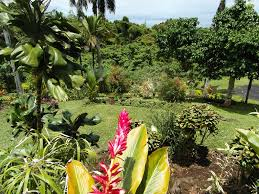 fiji real estate for sale by owner taveuni island jonny in fiji