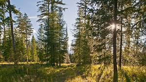 trees to in central oregon deschutes land trust