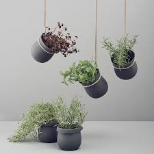 plant wall hangers indoor indoor garden idea hang your plants from the ceiling walls