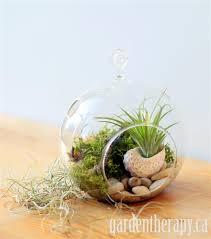 hanging globe terrarium garden therapy